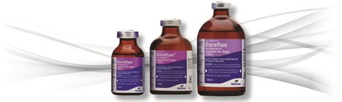 Enroflox® Injection For Dogs 2.27% (enrofloxacin)